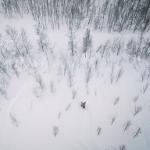 Arctic Lights – Cabin Rally